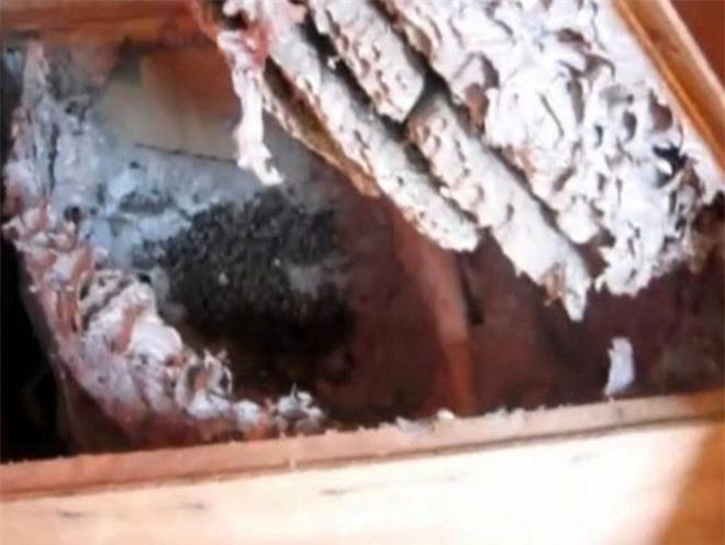 Phát hiện rương gỗ nặng bất thường trong nhà tổ, vừa mở ra xem, người đàn ông lập tức đóng lại rồi vội vàng gọi cảnh sát - Ảnh 2.
