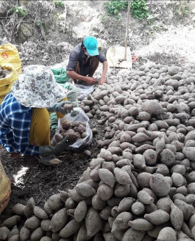 Lần đầu nông dân bán hàng trăm tấn nông sản trên sàn thương mại điện tử - 4