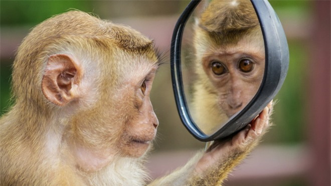 Tại sao con người có thể nhận ra bản thân mình trong gương, nhưng hầu hết các loài động vật trên hành tinh của chúng ta lại không? - Ảnh 1.