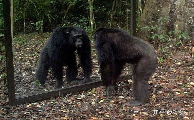 Tại sao con người có thể nhận ra bản thân mình trong gương, nhưng hầu hết các loài động vật trên hành tinh của chúng ta lại không? - Ảnh 2.