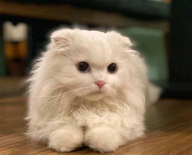 Được tặng chú mèo tai cụp ngoan ngoãn, cô gái đang vui thì nhận được câu nói như 'sét đánh ngang tai' từ bác sĩ thú y - Ảnh 3.