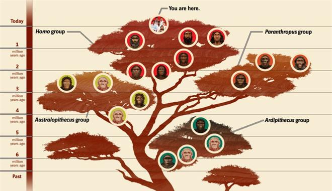 Tại sao các loài động vật khác có nhiều chi, họ, nhưng con người hiện đại lại chỉ có một? - Ảnh 1.