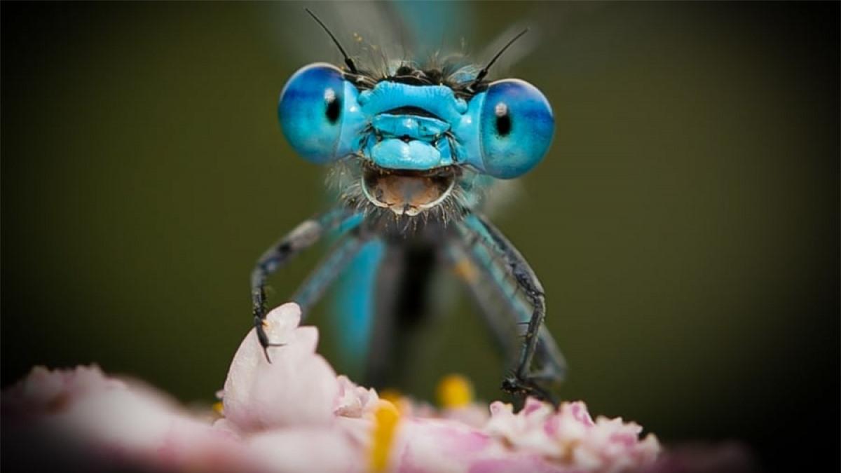 Chú chuồn chuồn trong bức ảnh của Axel Bocker trông như đang cười lớn khi nhìn vào camera.