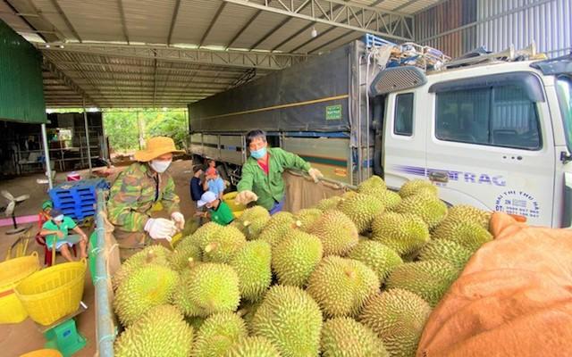 Sầu riêng là mặt hàng nông sản được tỉnh Đắk Lắk đề nghị hỗ trợ đầu ra.