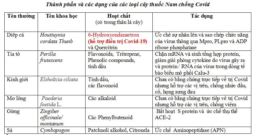 Thành phần và các dụng của các loại cây thuốc Nam chống Covid