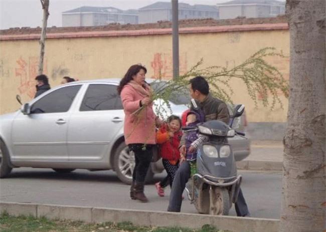 Loài cây không ai nghĩ có thể ăn được, người Trung Quốc rủ nhau hái trụi công viên 4
