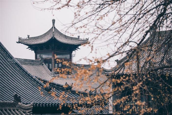 Ngôi chùa hàng nghìn năm tuổi bỗng dưng nổi tiếng chỉ vì loài cây này 13