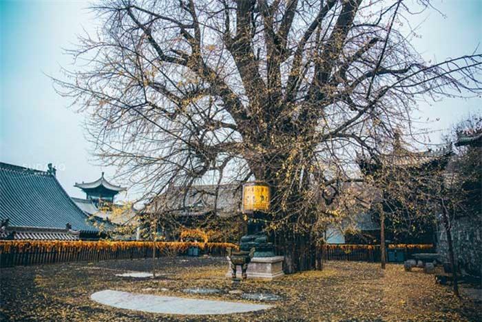 Ngôi chùa hàng nghìn năm tuổi bỗng dưng nổi tiếng chỉ vì loài cây này 3
