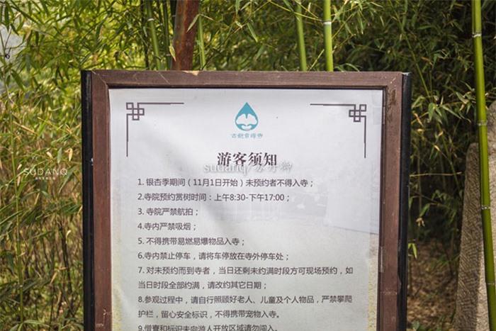 Ngôi chùa hàng nghìn năm tuổi bỗng dưng nổi tiếng chỉ vì loài cây này 4