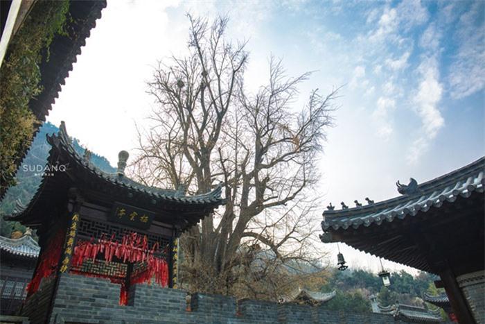 Ngôi chùa hàng nghìn năm tuổi bỗng dưng nổi tiếng chỉ vì loài cây này 9