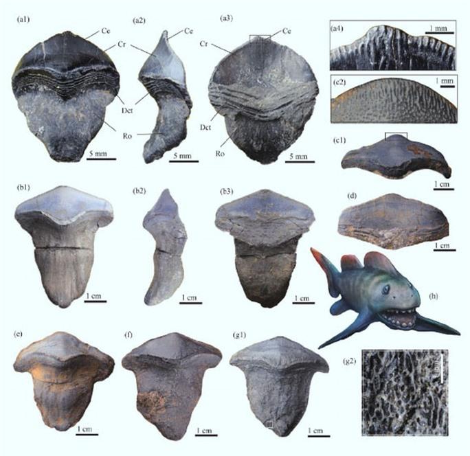 Tái sinh quái ngư răng cánh hoa 290 triệu tuổi, tổ tiên bóng ma đại dương - Ảnh 2.