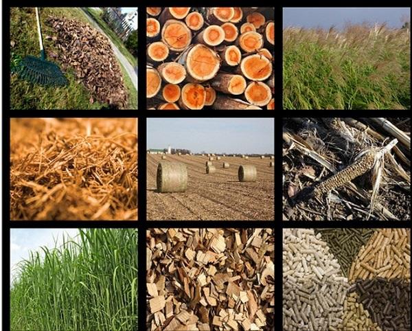 """Phụ phẩm nông nghiệp: Nguồn tài nguyên được ví như """"vàng"""" đang bị lãng phí."""