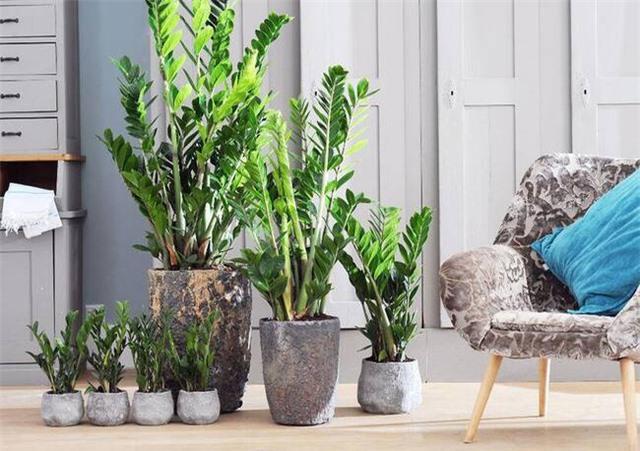 Theo phong thủy có 3 loại cây nên đặt trong nhà giúp gia chủ làm ăn hanh thông, tăng vượng khí và sống trường thọ mà bạn không nên bỏ qua - Ảnh 2.