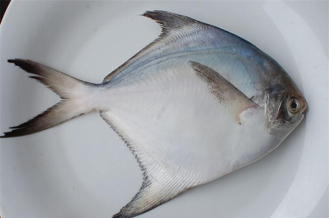 Ăn cá nào để mẹ khỏe, con thông minh? Điểm danh các loại cá biển tốt cho bà bầu - Ảnh 2.
