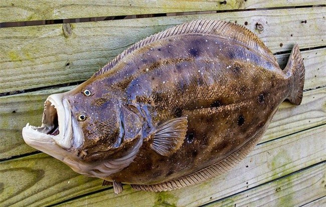 Ăn cá nào để mẹ khỏe, con thông minh? Điểm danh các loại cá biển tốt cho bà bầu - Ảnh 3.