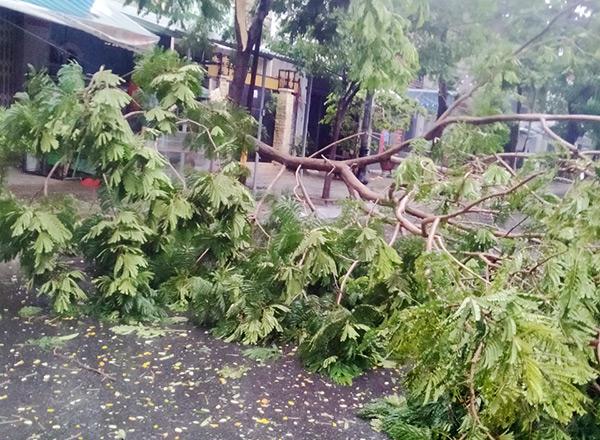 Cây xanh gãy đổ trên đường Hồ Quý Ly (quận Thanh Khê, Đà Nẵng) ngày 11/9