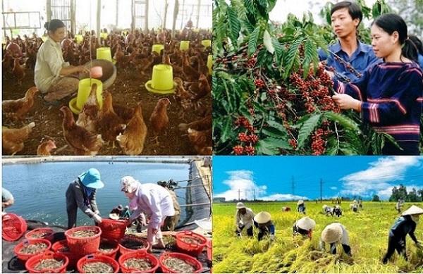 Theo Bộ NN-PTNT, trong 8 tháng đầu năm,cả nước cơ bản chủ động được nhu cầu lương thực, thực phẩm cho người dân.