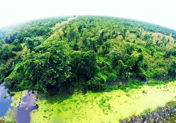 Khám phá khu rừng ở Việt Nam được xếp loại quý hiếm trên thế giới - 3
