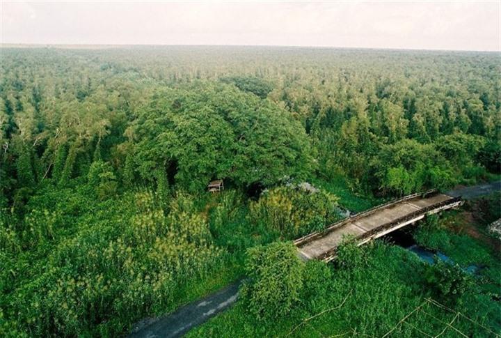 Khám phá khu rừng ở Việt Nam được xếp loại quý hiếm trên thế giới - 6