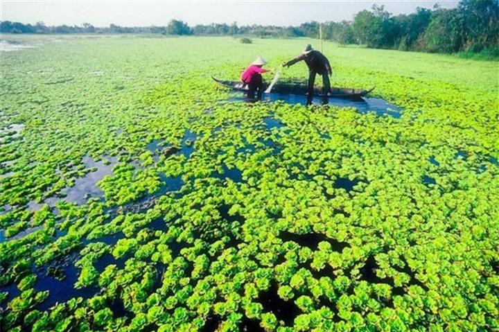 Khám phá khu rừng ở Việt Nam được xếp loại quý hiếm trên thế giới - 7