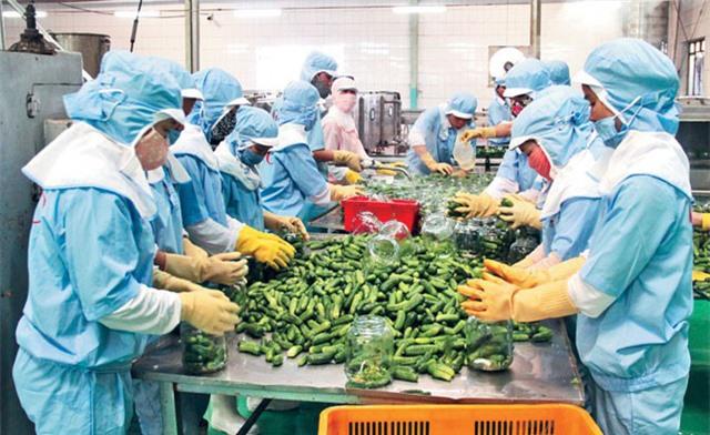 Giải pháp nào để thúc đẩy xuất khẩu nông sản cuối năm? - Ảnh 3.