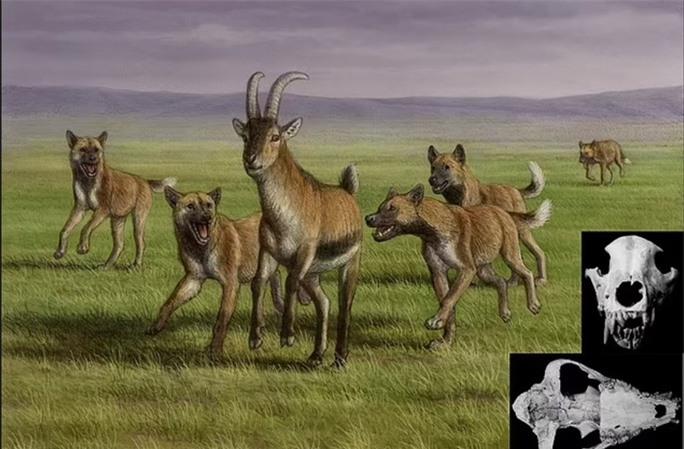 Mộ phần người khác loài và quái thú 1,8 triệu tuổi: lịch sử thay đổi? - Ảnh 1.
