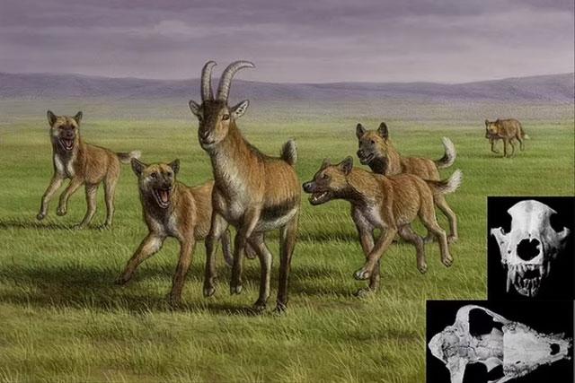 """Mộ phần người khác loài và """"quái thú"""" 1,8 triệu tuổi: lịch sử thay đổi?"""