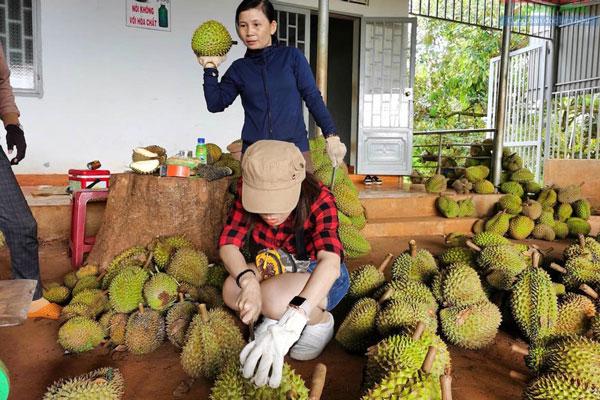 Vì sao khoai lang, sầu riêng chưa được xuất khẩu chính ngạch sang Trung Quốc?