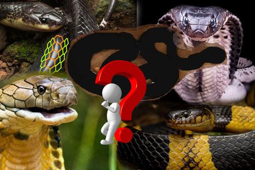 Vụ bé trai 4 tuổi bị rắn cắn ở Quảng Ngãi: Đây là loài rắn còn đáng sợ hơn hổ mang chúa