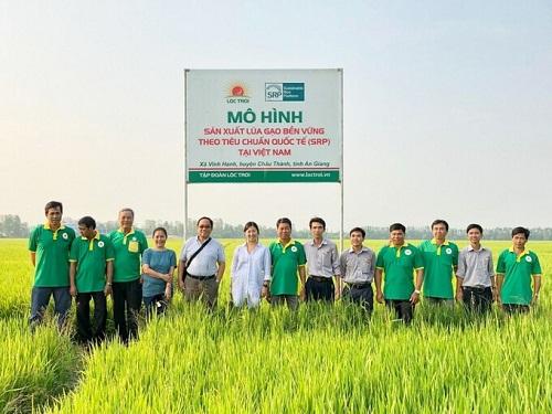 An Giang: Tập đoàn Lộc Trời thí điểm mô hình sản xuất lúa rải vụ giúp nâng cao năng suất và chất lượng