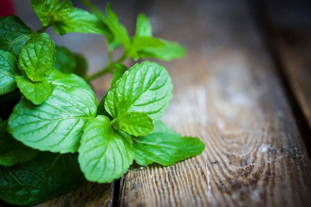 Lợi ích quý giá của lá bạc hà và cách dùng để giảm cân hiệu quả nhất cho bạn