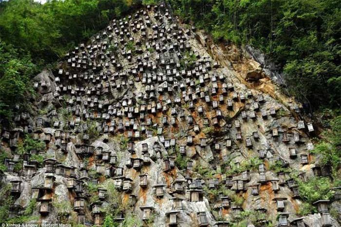 Bí ẩn hàng trăm hộp gỗ kỳ lạ trên vách đá 5