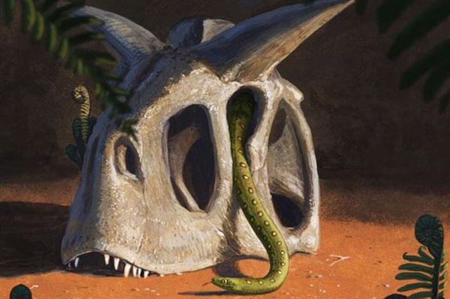 Loài rắn đa dạng hóa sau sự kiện tuyệt chủng