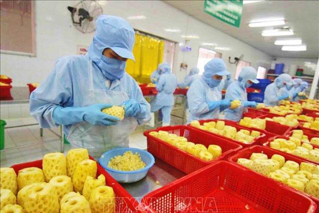 Chế biến sản phẩm dứa đóng hộp tại nhà máy của Công ty CP xuất nhập khẩu nông sản An Giang. Ảnh: Vũ Sinh/TTXVN