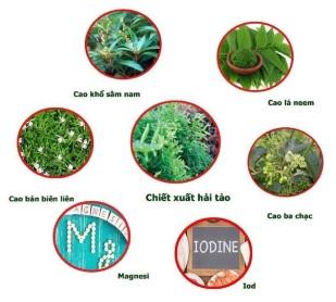 Các thành phần thảo dược giúp cải thiện bướu tuyến giáp hiệu quả.
