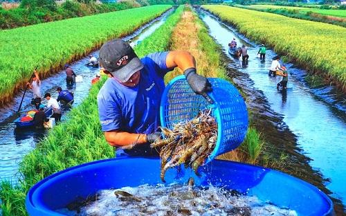 Tổng cục Thủy sản yêu cầu kiểm tra tôm giống của 2 công ty ở miền Tây
