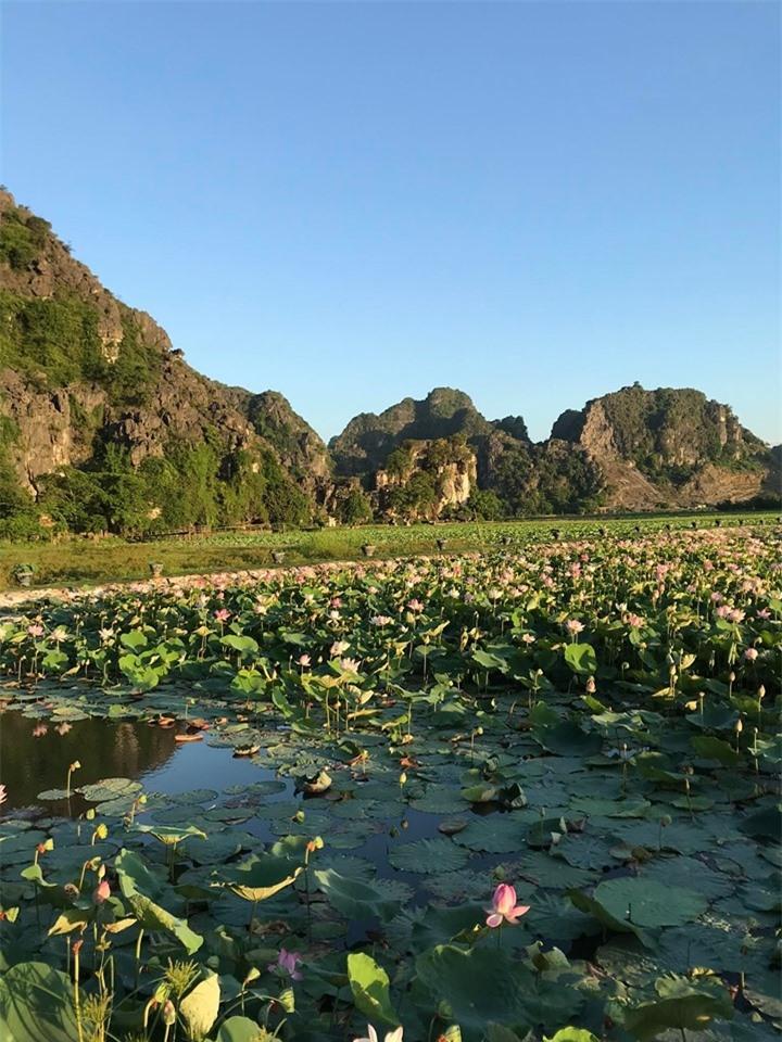 Hang Múa Ninh Bình đẹp thơ mộng mùa sen nở - 12