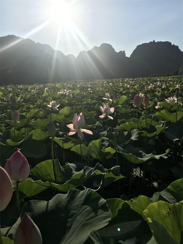 Hang Múa Ninh Bình đẹp thơ mộng mùa sen nở - 2