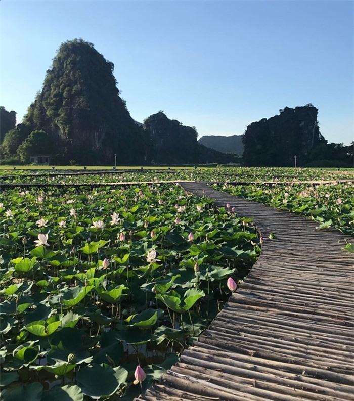 Hang Múa Ninh Bình đẹp thơ mộng mùa sen nở - 3