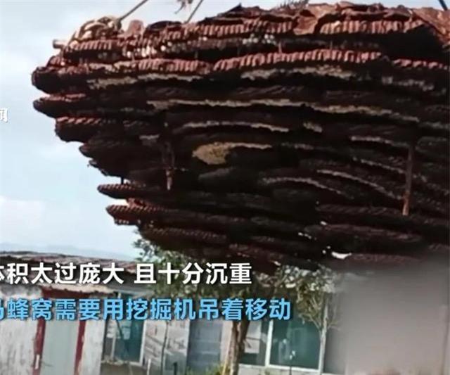 Phát hiện tổ ong 10 tầng to như cái nhà, dân làng thuê cần cẩu gỡ xuống để đem đi đăng ký kỷ lục Guinness - Ảnh 3.