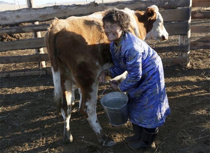 Bà Sendin Ondar, 77 tuổi vắt sữa bò ở nông trại gia đình ở làng Cheder hồ Kur-Cher, Cộng hòa Tuva, miền Nam Siberia, Nga.