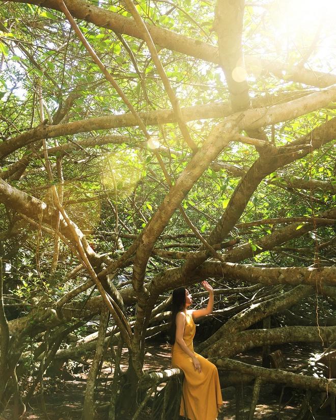 Cây gừa cổ thụ thuộc di tích Giàn Gừa được Hội Bảo vệ Thiên nhiên và Môi trường Việt Nam công nhận là cây di sản Việt Nam. Nằm ở huyện Phong Điền, Cần Thơ, di tích Giàn Gừa được xem là độc nhất vô nhị ở Việt Nam, với những thân, nhánh gừa cổ thụ uốn lượn, đan cài chằng chịt vào nhau cả trên không trung lẫn dưới mặt đất, tạo thành giàn lớn như một mê cung khổng lồ. Ảnh: Hà Trang.
