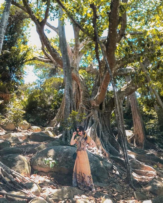 Nằm lặng lẽ ở rìa phía đông bán đảo Sơn Trà, cây đa di sản có tuổi thọ khoảng 800 năm. Cây được nhận xét có hình thế hùng vĩ bậc nhất Việt Nam. Cây có tán rộng, chu vi thân 10 m, có 26 rễ phụ bám sâu xuống đất. Những phần rễ phụ này đổ xuống ăn sâu vào mặt đất tạo nên vẻ đồ sộ. Ảnh: _nhtruc_.