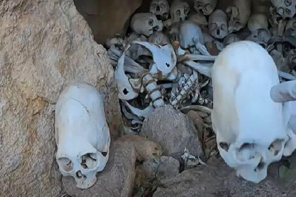 Kỳ lạ những hộp sọ dài được tìm thấy ở Peru