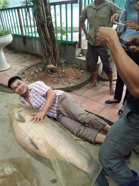 Con cá nặng 52 kg, dài gần bằng chiều cao người trưởng thành. Ảnh: Đất việt