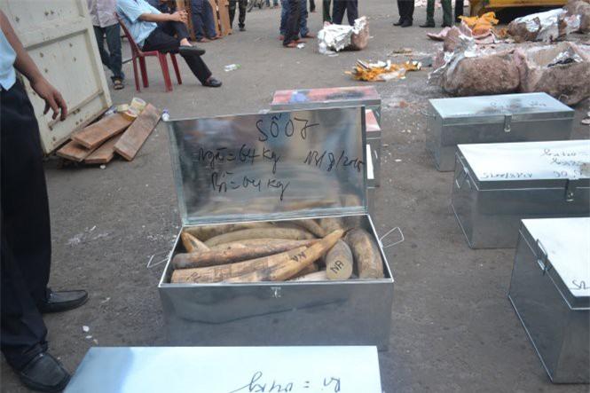 Cơ quan chức năng phát hiện vụ buôn lậu ngà voi qua cảng Tiên Sa - Ảnh: Đ.C./Tuổi trẻ