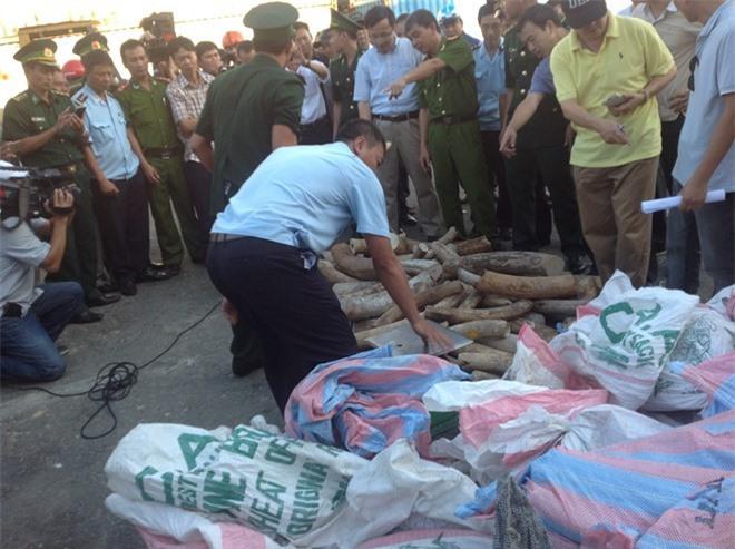 Hàng tấn ngà voi được ngụy trang trong túi ni lông, xếp lẫn và mặt hàng gỗ xẻ đựng trong container qua cảng Đà Nẵng. Ảnh: N.B/Lao động
