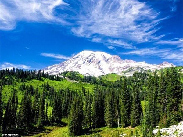 Trái đất đã từng có tới gần 6 nghìn tỉ cây.