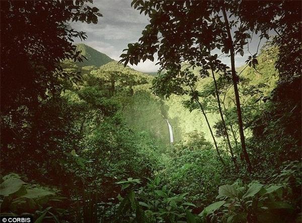 Thảm thực vật trên Trái đất đã bị triệt hạ một nửa kể từ khi loài người xuất hiện