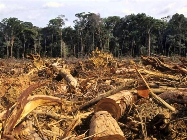 Cảnh phá rừng tại rừng rậm Amazon - khu rừng nhiệt đới lớn nhất thế giới.